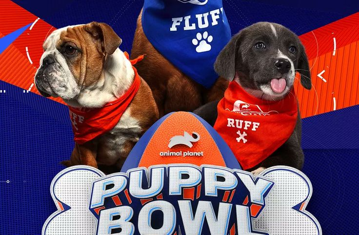 Animal Puppy Bowl 2020 February 2 Australian