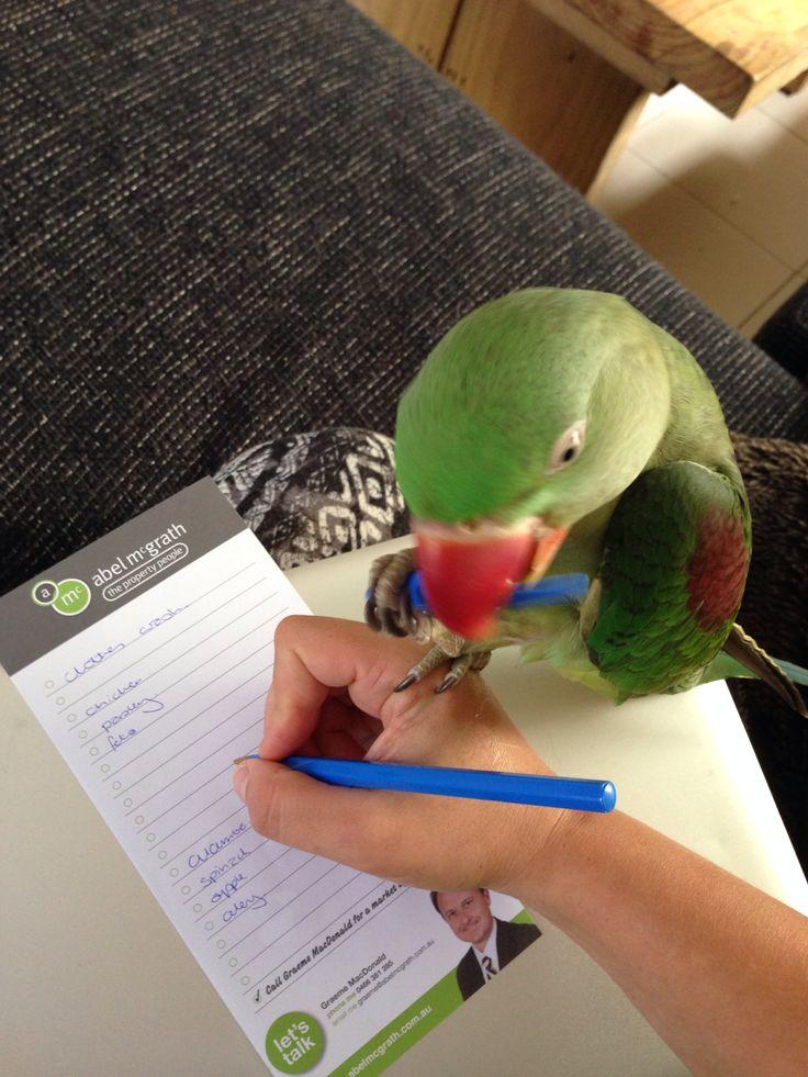 Helpful bird