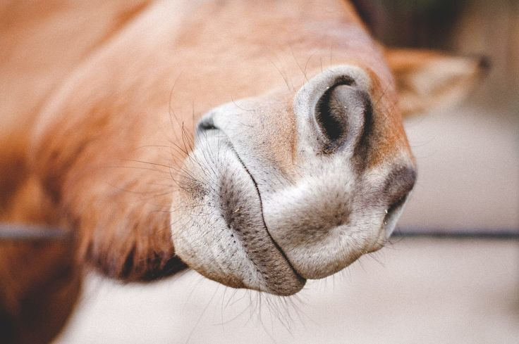 Learn what horse face expressions mean