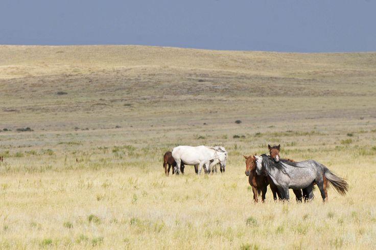 Cai sălbatici în stepa kazahă, pe drumul dintre Kharaghanda şi Balqash, în Kazahstan, august 2013. (  Theodor Pană / Mediafax Foto  ) - See more at: http://zoom.mediafax.ro/travel/two-ride-pamir-11534679#sthash.zlhQYDsn.dpuf