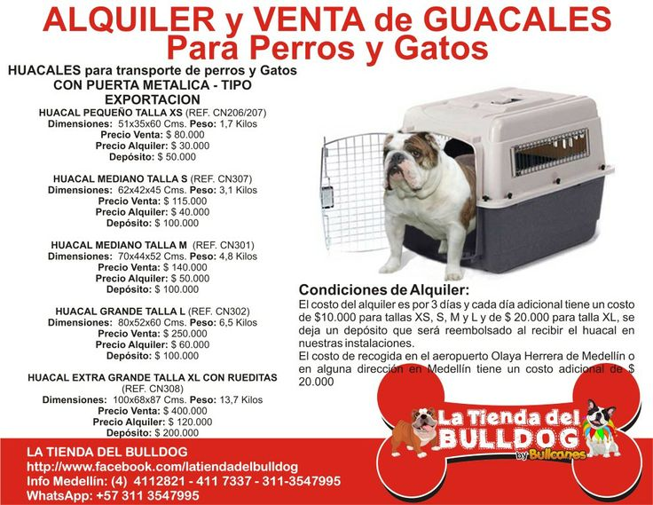 LA TIENDA DEL BULLDOG by BULLCANES Colombia Info: Cel y WhatsApp: 311-3547995 / Tel: (57+4) 4112821 / latiendadelbulldog@hotmail.com / https://www.facebook.com/latiendadelbulldog / Intagram_ @tienda_del_bulldog / @BULLCANES Bulldog puppies for Sale Bulldog puppies for Sale #bullcanes #bulldog #bulldogingles #bulldogfrances #latiendadelbulldog #tiendademascotas #bulldogcolombia #mascotas #pets #mascotascolombia #bulldogpuppy #colombia #biogroom #angeleyes Envios a cualquier ciudad