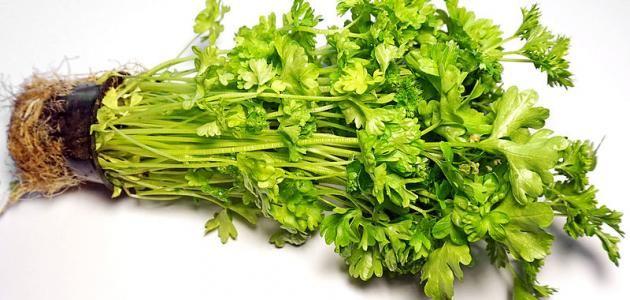 اعشاب تنزل الدورة الشهرية للبنات Herbs Food