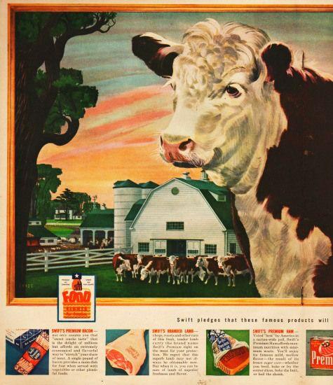 vintage illustration cattle at farm