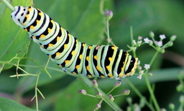 Top 9 Different Types Of Caterpillars Caterpillars Caterpillar