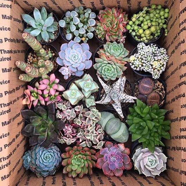 A box full of beauties #leafandclay #succulents