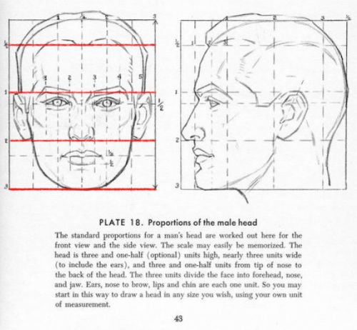 112 best Anatomy - Head and Face images on Pinterest ...