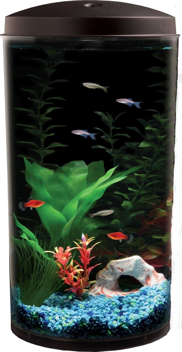 Freshwater fish jigsaw puzzles - Show Off Your Fish In A New Light With This Api Aquaview 360 Aquarium Kit From Kollercraft Which Features Multi Color Led Lighting Effects
