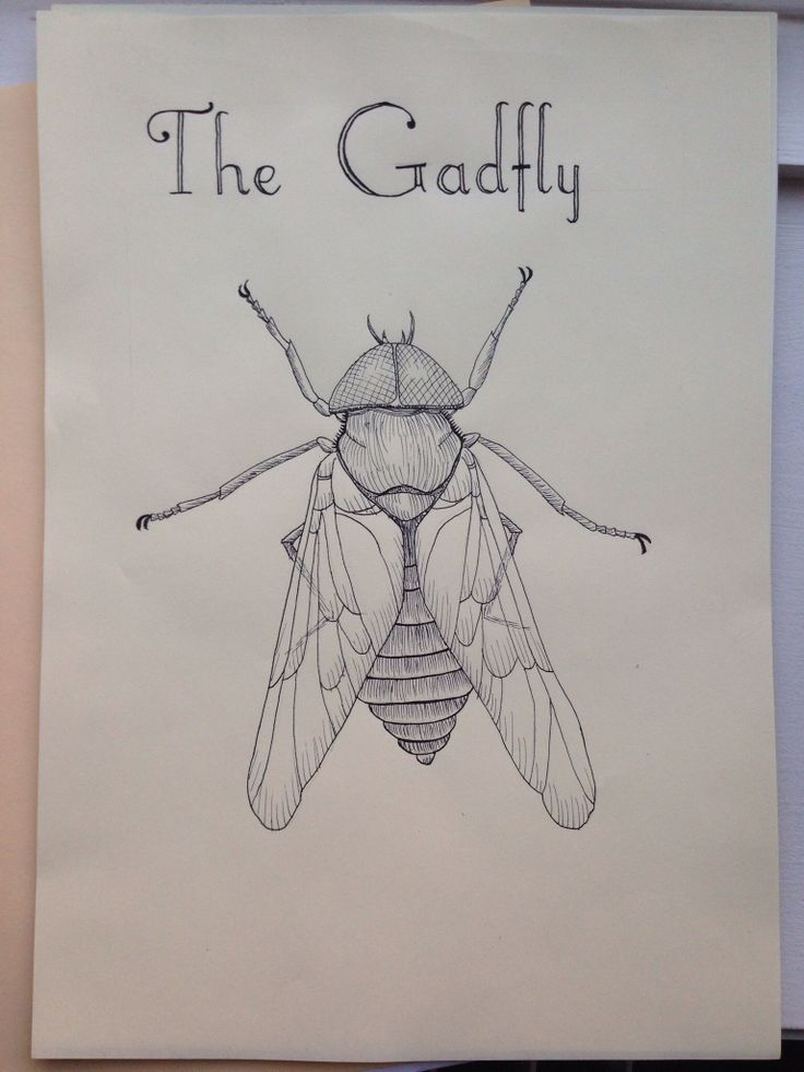 The gadfly, drawn with a calligraphy pen