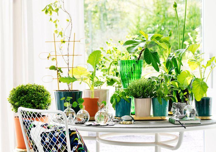 'Botany' section via Svenskt Tenn whose founder Estrid Ericson identified four classic vases for every home: Syltkrukan (the Jam Pot), Ingefärskrukan (the Ginger Pot), Tennbägaren (the Pewter Chalice) and Muggen (the Mug).
