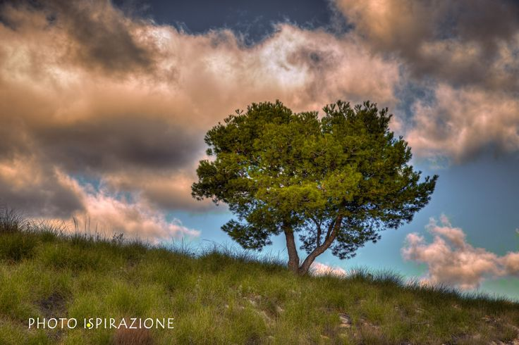The tree HDR by Antonio Photo-Ispirazione on 500px