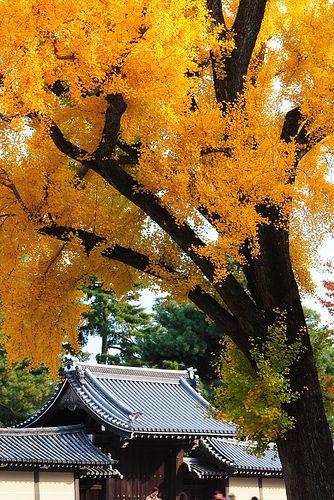 Kyoto-Gosho #japan #kyoto