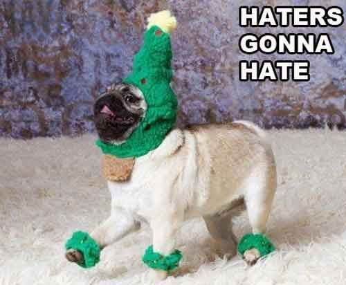 Pug.. Haters gonna hate! Hahaha this made me laugh (: Pug in an elf costume :D