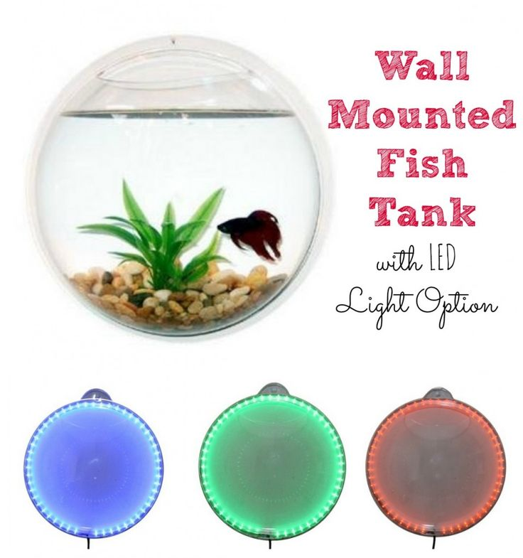 Wall Bubble Aquarium Sale for Beta Fish $11.89 from $47 – Unique Gift #hotdeals #whiteelephantgift