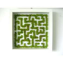 http://phytodeco.weezbe.com