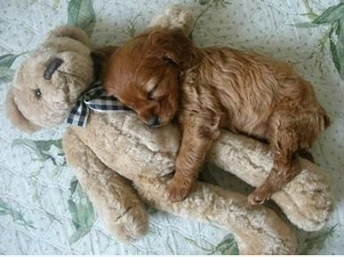 The Only Thing Cuter Than Puppies With Stuffed Animals Is Nothing. Here's 8 Pics To Prove It.