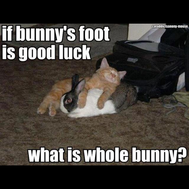 How To Pet A Cat Good