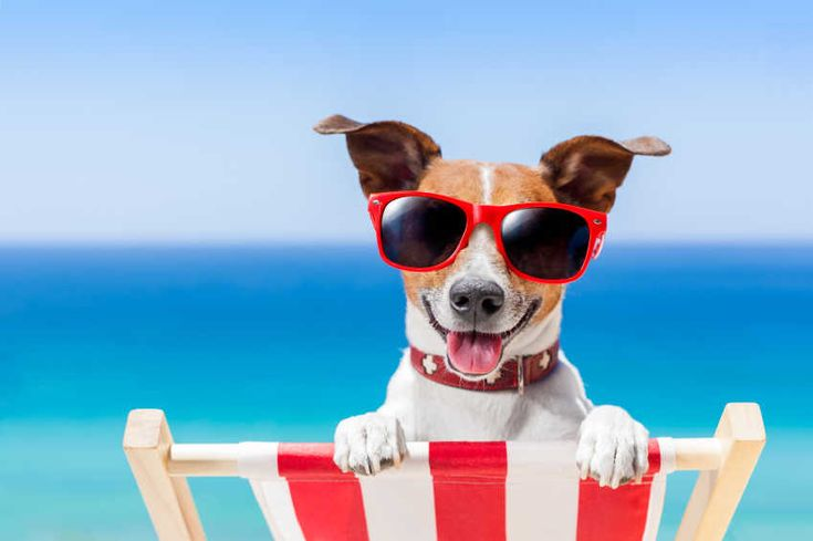 For dog and other pet lovers we selected the TOP 10 pet friendly holiday homes in Sicily  with the best value for money. Have a look at them here: https://www.hellolodge.net/en/search/pets-allowed/sicily/fenced-garden/?page=1&sort=by-vfm&utm_source=facebook&utm_medium=pet_friendly
