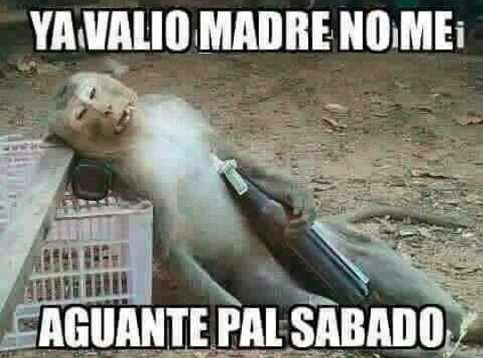 Funny Monkey Meme In Spanish : Best memes images funny pics all alone and