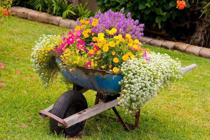 This old rusted wheelbarrow is the perfect example of reusing old gardening hardware as completely as possible. A heady mixture of colors spills down every side, blooming tall over the vessel.