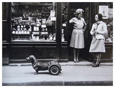 63 best images about paris dogs on pinterest elliott