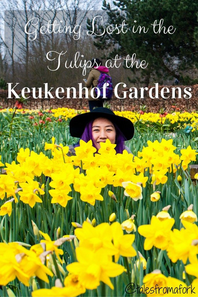 tulips from the Keukenhof Gardens in the Netherlands opening day 2016