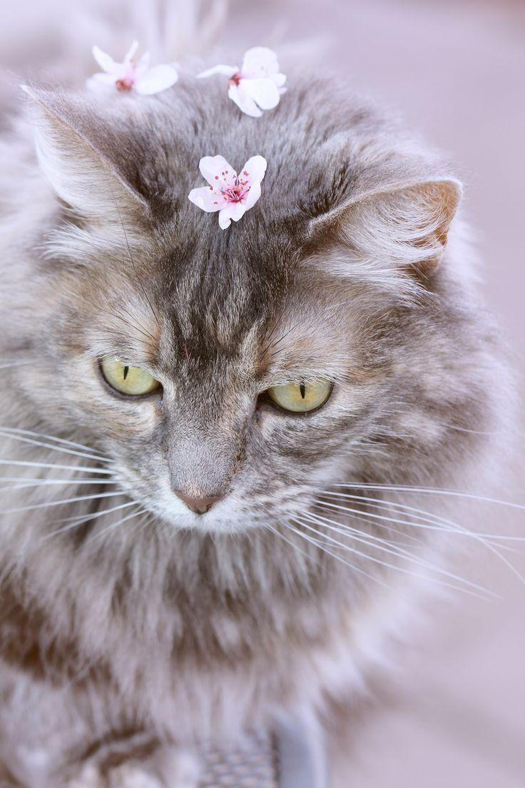 https://flic.kr/p/rhHFgQ | Flower Girl I | Camera: Canon EOS 60D/Lens: EF-S17-55 f/2.8 IS USM/Editing: Photoshop CS6