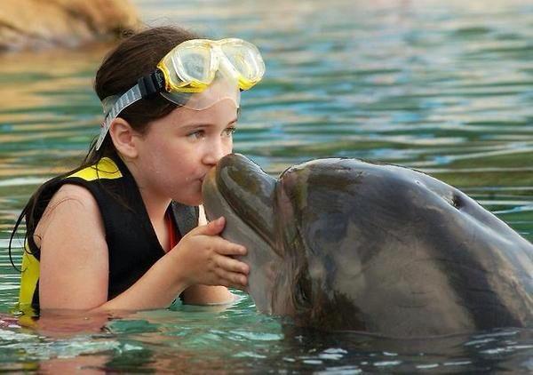 Kiss me dolphin!