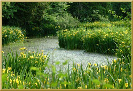 Lynn Valley Trail - Norfolk County