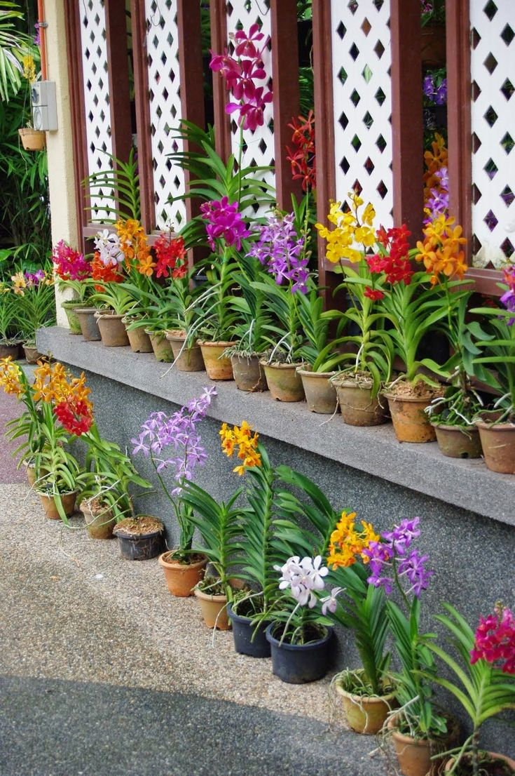 Vertical garden design with orchids space saving backyard landscaping - Orchid Growing Tips Choosing Watering Repotting Fertilizing And Maintenance Tips All