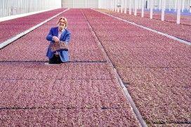 Reportage: Piepkleine plantjes met grootse smaken