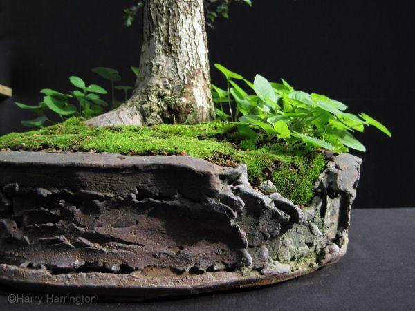 64 best images about bonsai pots on pinterest ceramics for Cool bonsai tree