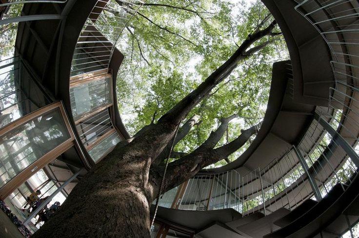 'Ring Around A Tree', A Beautiful Kindergarten in Fuji