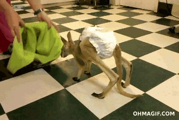Baby Joey testing out its new home [gif]