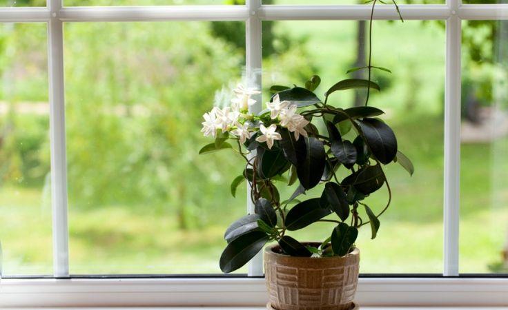 Plante la ghiveci pentru dormitor, care te ajuta sa dormi repede