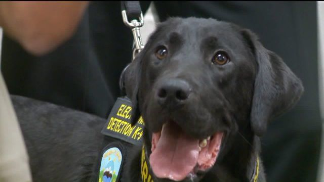 Utah police K9 trained to smell electronic storage devices