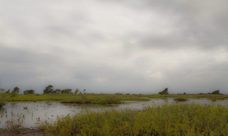 Pantanos del Mar del Sur II