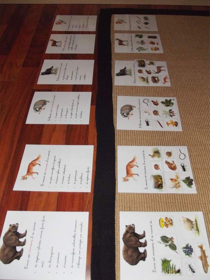 Voici la partie du travail que j'avais hâte de présenter à Line : qui mange quoi... et qui mange qui. Nous avons travaillé sur l'alimentation d'animaux : herbivores, insectivores, carnivores, et omnivores. Instructions : Disposer les cartes légendées...