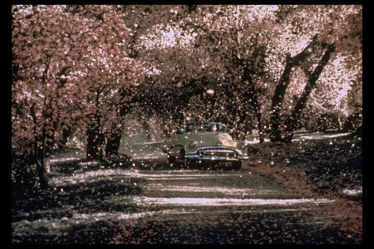 """Pleasantville; the scene is set to """"At Last"""" with the most beautiful version by Etta James that I've ever heard."""