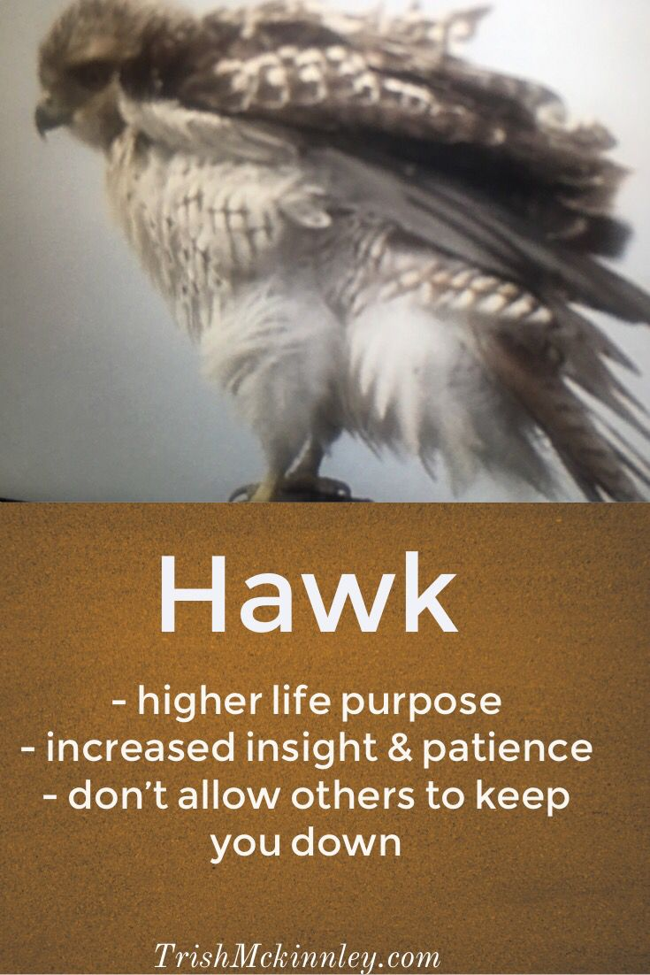 Power Animals | spirit animals | Hawk spirit animal, Animal meanings
