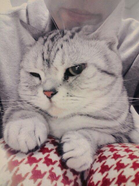 Annoyed veco