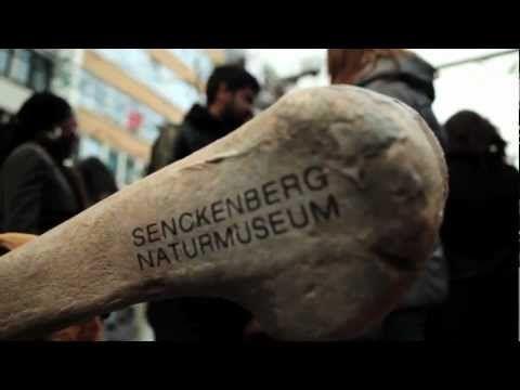 Senckenberg Museum 'Riesenknochen' ah ah ah wonderful!!!!