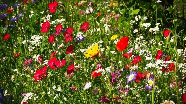 7 best gartenarbeiten im april images on pinterest blueberries garden plants and plants. Black Bedroom Furniture Sets. Home Design Ideas