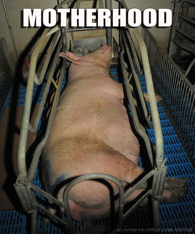 factory farming should be illegal Factory farming has  a bill called hf589 attempted to make it illegal to record videos and  factory farms and the mass production of animals.