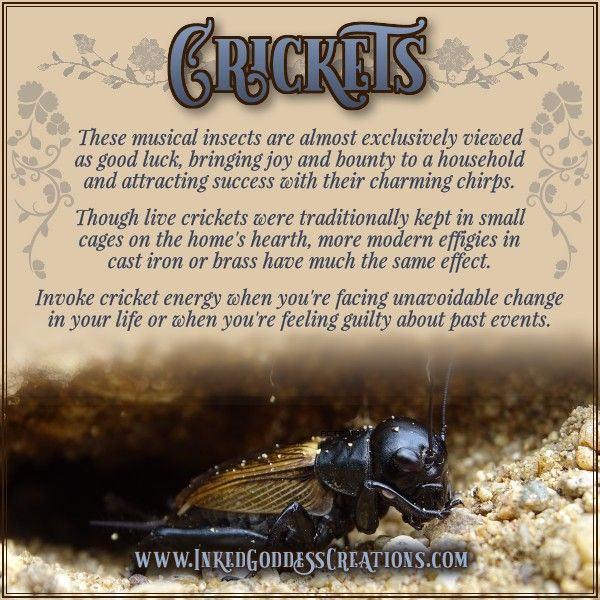 Crickets These Insects Really Are Playing The World S Tiniest Violins But Did You Animal Totem Spirit Guides Animal Spirit Guides Spirit Animal Totem