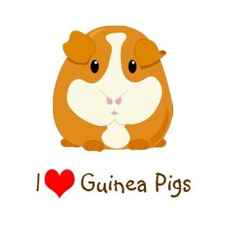 cute guinea pig quotes | Cartoon Guinea Pig Pigs
