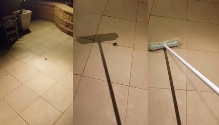 Co może się stać, gdy spróbujesz zabić pająka miotłą? Tylko dla ludzi o mocnych nerwach! - Natopie.to