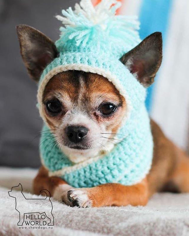 31 besten Dog Crochet hats & Costumes Bilder auf Pinterest | Hund ...