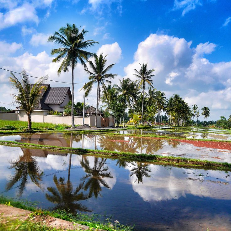Beautiful reflection in one of the rice fields in Bali #travel #reflection