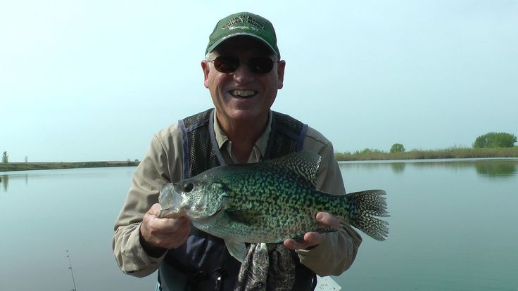 17 7 8 inch best ever giant crappie on video free for Best crappie fishing times