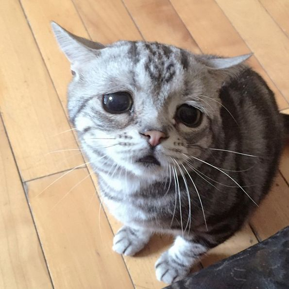 This Perpetually Sad Kitty Is The Internet's Newest Cat Sensation